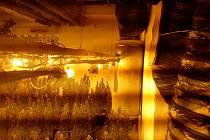Pěstírna marihuany se ukrývala ve sklepě pod bývalou prodejnou