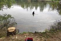 Muž se ve studené vodě potápěl pro mobilní telefon.