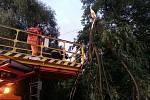 Spadlá větev na trakční vedení zastavila trolejbusovou dopravu do města.