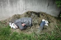 Opilý bezdomovec se po dvou lahvích rumu zavrtal do hromady posekané trávy.