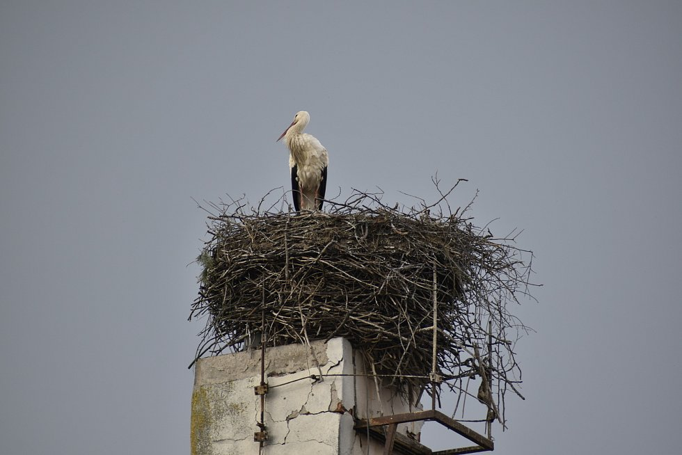Čapí hnízdo v Sezemicích.
