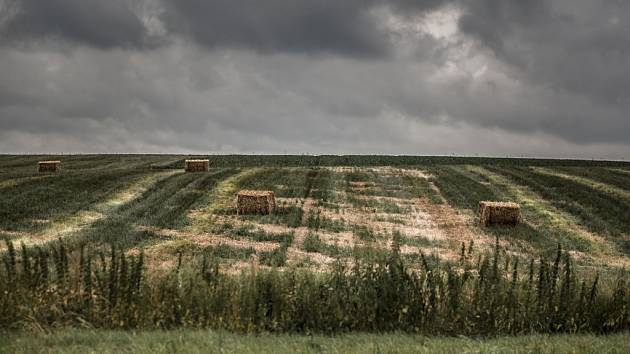 Déšť brání sklizni zralého obilí.
