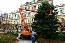 Masarykovo náměstí v Přelouči již zdobí mohutný vánoční strom