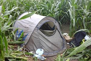 Bezdomovec se zabydlel v kukuřičném poli