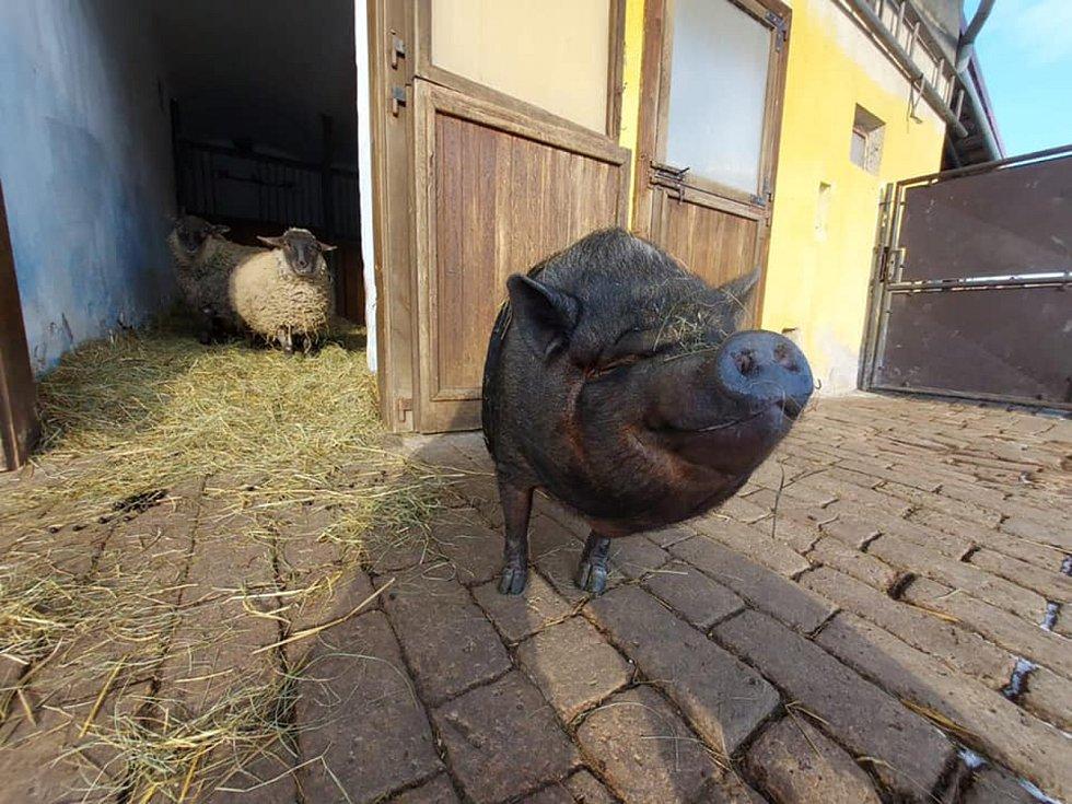 Lidé z nadačního fondu Pardubice sobě provozují u Sezemic farmu, kde se starají o zachráněná zvířata. Foto: farma U Veselýho Psa