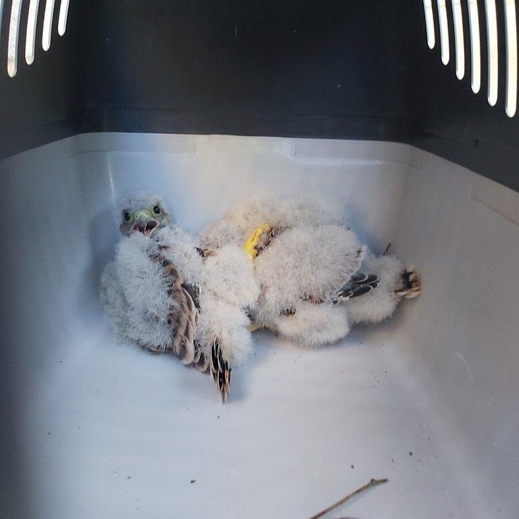Během čtvrtka tak strážníci zachránili sedm zvířat, která poputují do Záchranné stanice Pasíčka.