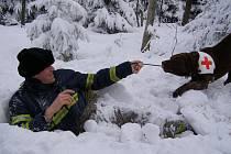 Pes ucítí zavaleného člověka pod sněhem už na 200 metrů. V praxi tak může nahradit až desítky záchranářů a ušetřit potřebný čas.