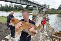 Zraněný pes obsadil vlastní ostrov