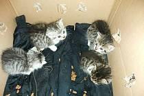Na krabici byl kostrbatým písmem napsán vzkaz s prosbou o odchování kočiček, protože tíživá situace nedovoluje majiteli kočky odchovat. Spolu se čtyřmi koťaty byla v krabici právě i jejich matka.