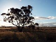 Toto je typická australská buš.
