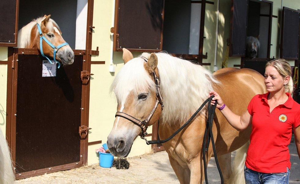 Koně v akci na závodišti v Pardubicích.