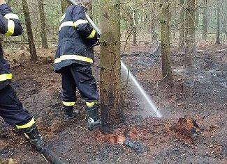 Pondělní podvečer u Semína na Přeloučsku. Hasiči bojovali s požárem lesa. Už zase...