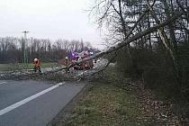 Hasiči po celém kraji odstraňují popadané stromy.