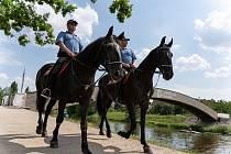 Součástí Městské policie Pardubice je i jízdní oddíl. Koně jdou do akce třeba při velkých sportovních utkáních, kdy se nezaleknou rozdivočelých fanoušků ani petard.