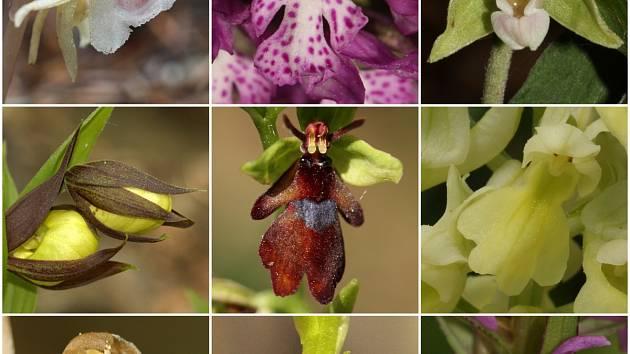 Orchideje.