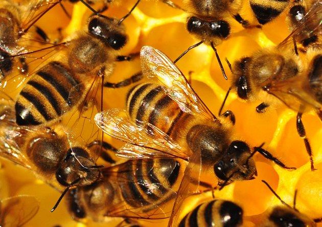 Na zámku zahájí velkou výstavu o včelách.