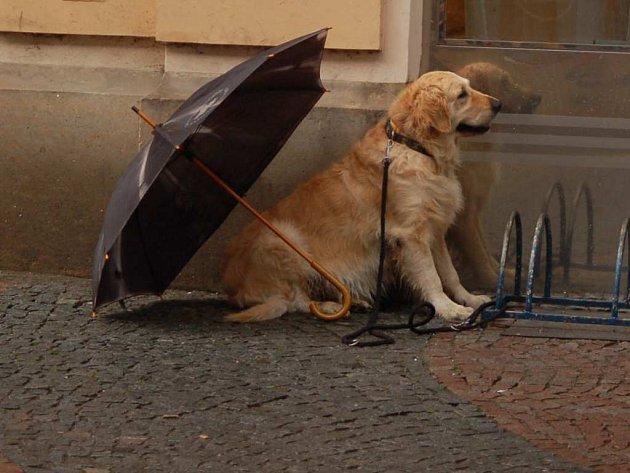 Přívalový déšť překvapil i psy.