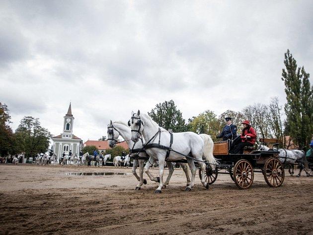 Hubertova jízda v Kladrubech nad Labem