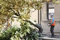 Poškozené stromy v ulici V Ráji musely k zemi. Po zásahu do kořenů totiž nebyly stabilní.
