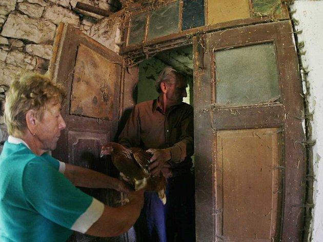 V Tisové dochází k usmrcování drůbeže drobných chovatelů