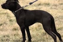 Fotografie psů, které měl osmadvacetiletý Konstantin R. na ulici bít velice surovým způsobem. Jejich fotografie vystavuje na sociální síti.