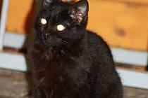 Černá kočka prý přináší smůlu