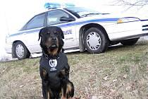 Rotweiler Scott se dožil v řadách Městské policie Lázně Bohdaneč úctyhodných 12 let.