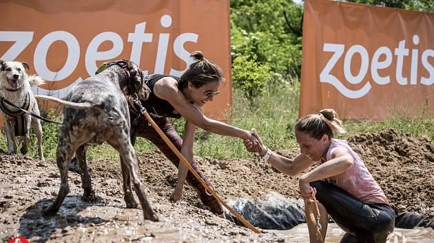 Hard dog race je vytrvalostní závod pro dvojici pes a člověk.