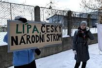Aktivisté se snaží zachránit lipovou alej.