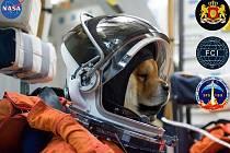 Jak by asi Mannymu slušel astronautský oblek, kdyby je vyráběli ve psí velikosti