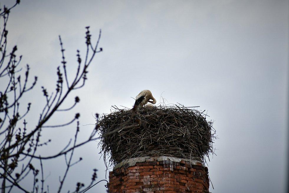 Čapí hnízdo v Pardubicích.