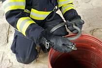 Užovka obojková potrápila hasiče