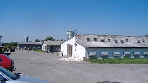 Farma v Holicích, kde uhynulo tisíc brojlerů