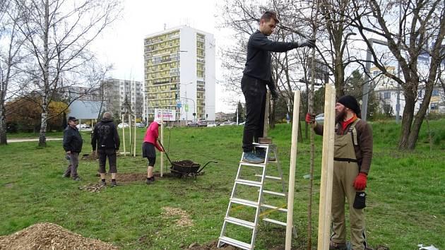 Pardubice mají nový veřejný ovocný sad. Dobrovolníci ho vysázeli v blízkosti křižovatky ulic Dašická a Na Drážce. Foto: Filip Sedlák