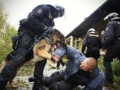 Mezinárodní cvičení pořádkových jednotek v Pardubicích. Svoji porci zábavy si užili také figuranti i policejní psi.