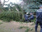 Technická výpomoc při kácení nebezpečných stromů