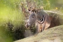 Safari park Dvůr Králové.