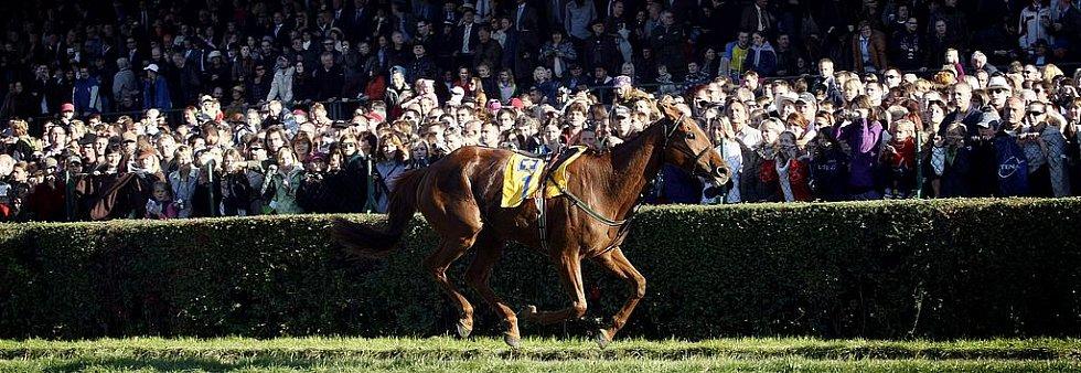 Kůň Terasina