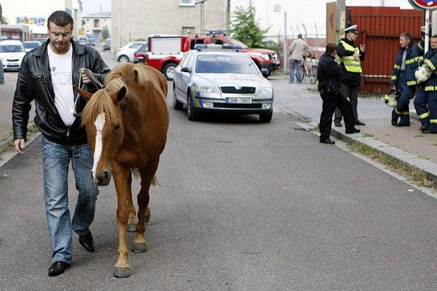 Z dostihového závodiště v Pardubicích utekla pětiletá kobylka. Policisté ji zastavili až v centru města.