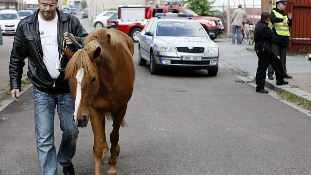 Z dostihového závodiště utekla pětiletá kobylka. Policisté ji zastavili až v centru města.
