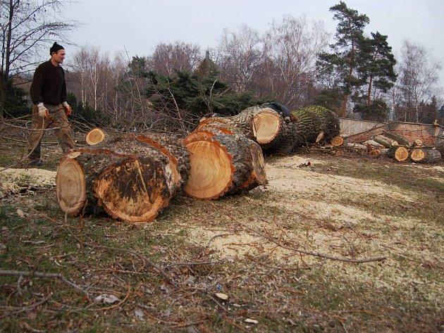 Kácení stromu v Tyršových sadech