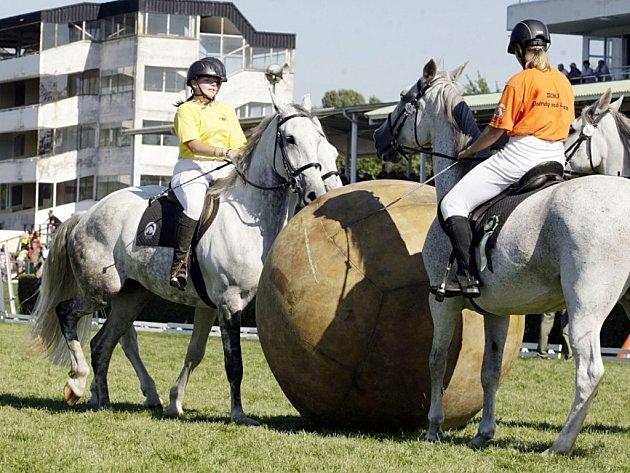 Koně v akci na pardubickém závodišti.