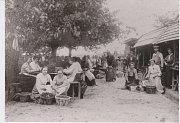 PŘEBÍRÁNÍ TŘEŠNÍ. Přebrané třešně se navečer dovezly z Choltic na vlak na přeloučské nádraží a druhý den ráno se již prodávaly ve Vídni. Přítrž tomuto obchodu učinilo vymrznutí většiny třešňovek v roce 1929.