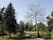 Zdevastované Tyršovy sady - krásná vizitka Pardubic