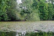 Město Pardubice plánuje revitelizaci a odbahnění Matičního jezera.
