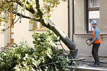 Kácení stromů v pardubické ulici V Ráji.
