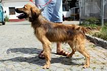 Don. Rok a půl starý, mladý kříženec. Vychází s lidmi i zvířátky, překypuje energií a potřeboval by zahrádku a také výcvik.