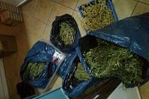 Marihuana, kterou hospodský vylepšoval nabídku svého podniku.