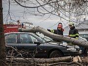 Silný vítr v Pardubicích v Husově ulici shodil v pátek ráno strom na zaparkované osobní vozidlo.