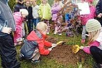 Na snímku sázejí červenolistý mléčný javor děti z Mateřské školy Pastelka